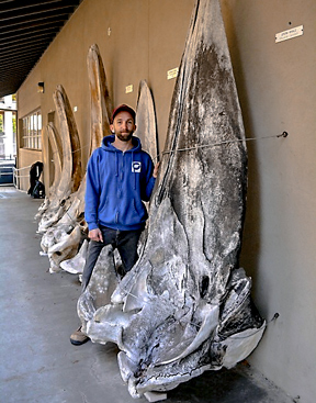 Lucas Custodio with a giant whale fossil